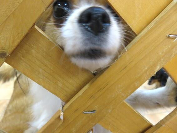 鼻を出している犬