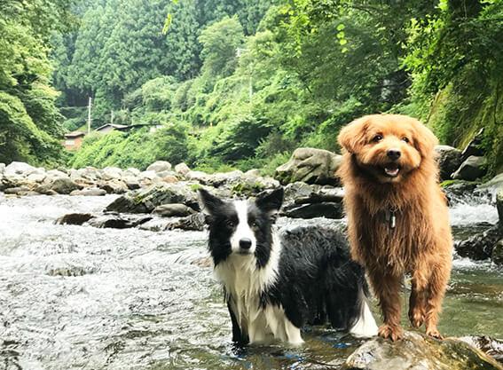 川遊びする犬の写真