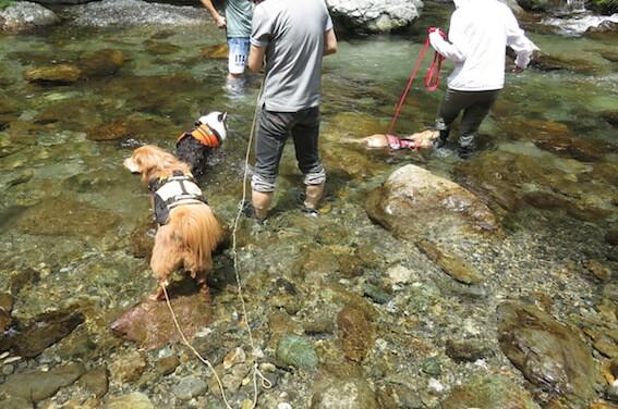川に入る犬の写真