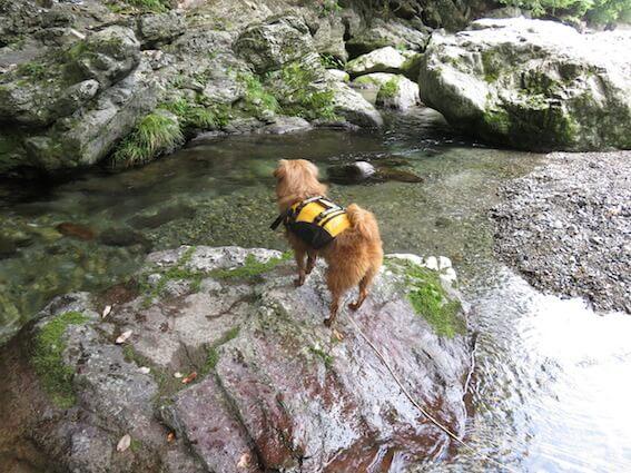 川の中の岩に登る犬の写真