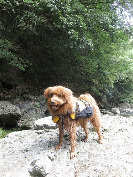 岩の上に立つ犬の写真