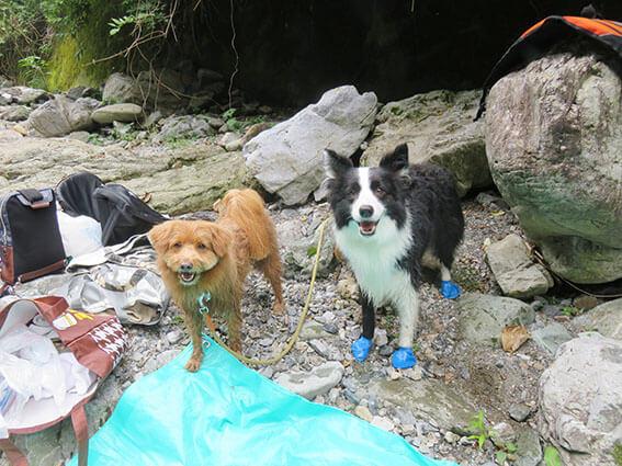 岩場に繋がれる犬の写真