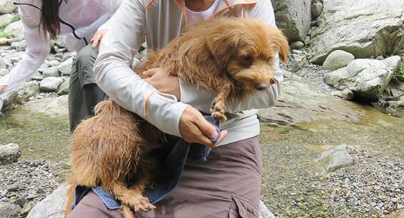 抱っこされている犬の写真
