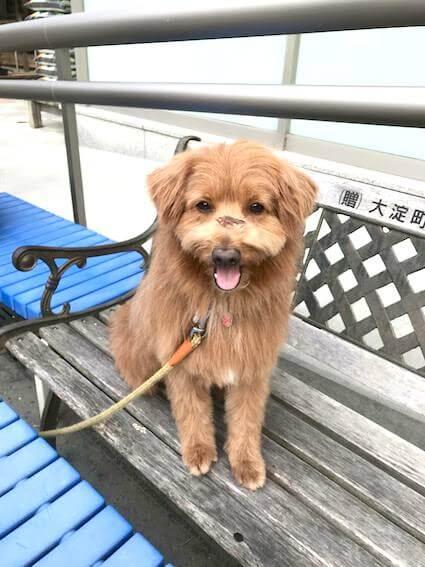 ベンチに座る犬の写真
