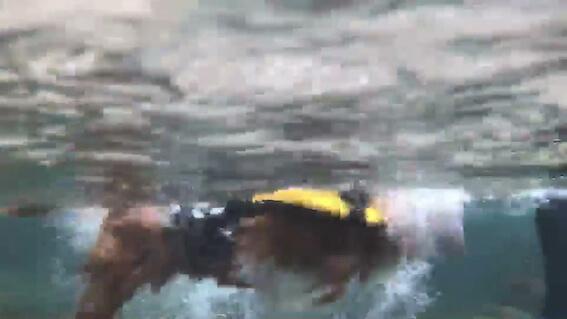 泳ぐ犬の水中写真