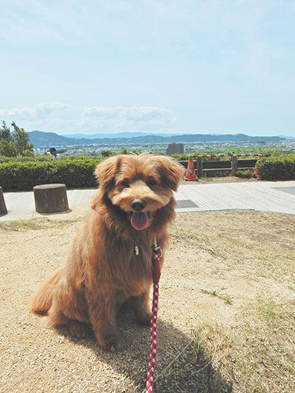 丘に座る犬の写真