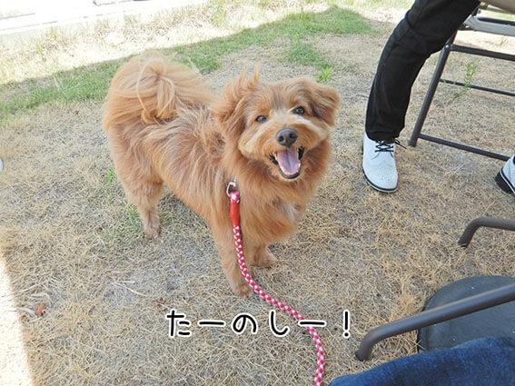 芝生の上にいる犬の写真
