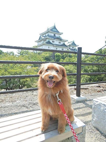 和歌山城の前で写真を撮る犬