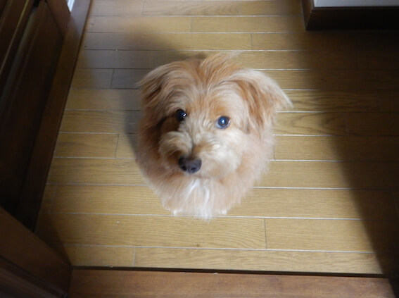不満そうな犬の写真