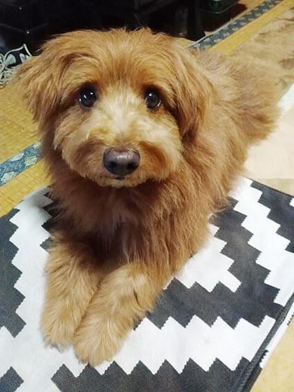 キョトンとする犬の写真