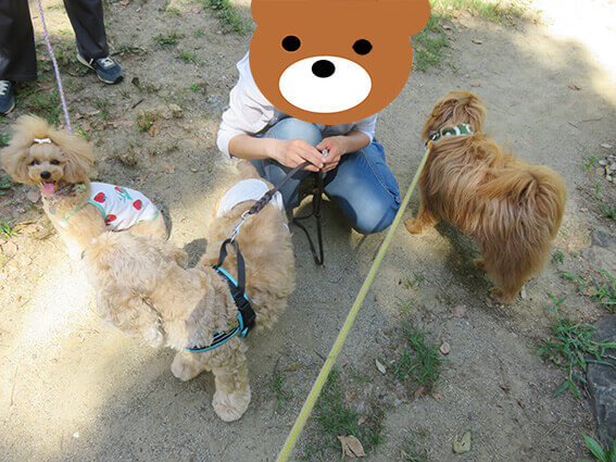 犬が集まっている写真