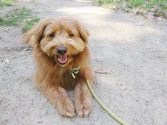 伏せて笑顔の犬の写真