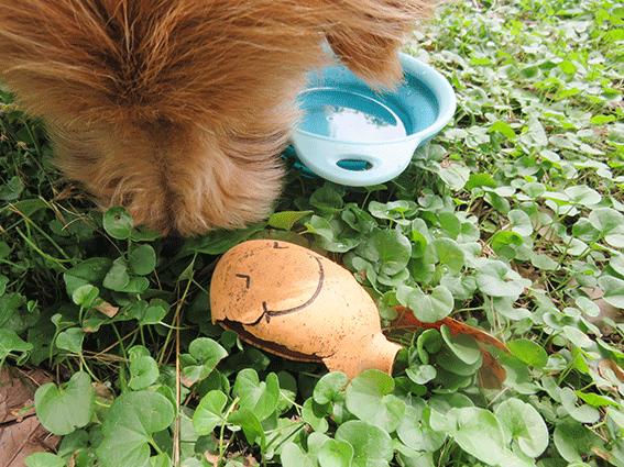 お気に入りのおもちゃを匂う犬の写真