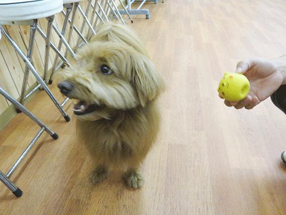 おもちゃから目を背ける犬の写真
