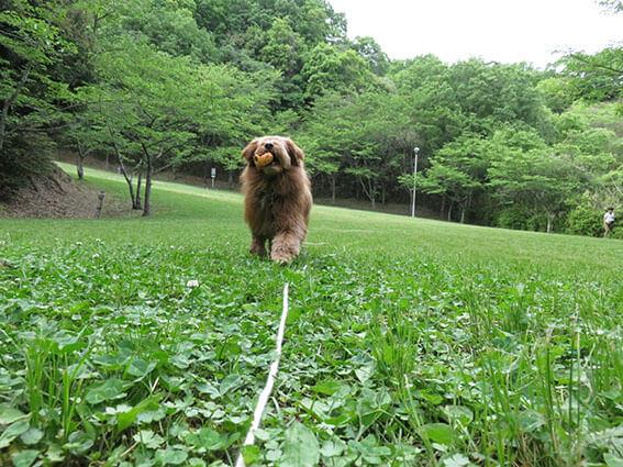 ボールをくわえてる犬