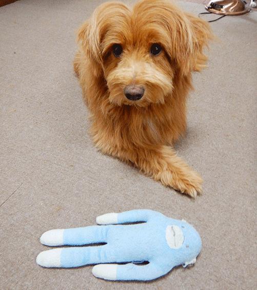 ボロボロのぬいぐるみと犬の写真