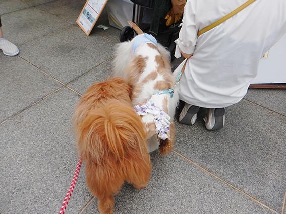 挨拶を交わす犬の写真