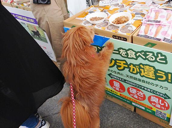 試食をねだる犬の写真