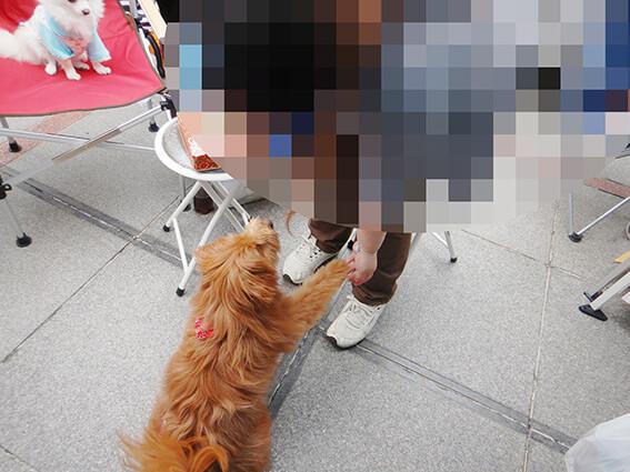 おやつをねだる犬の写真