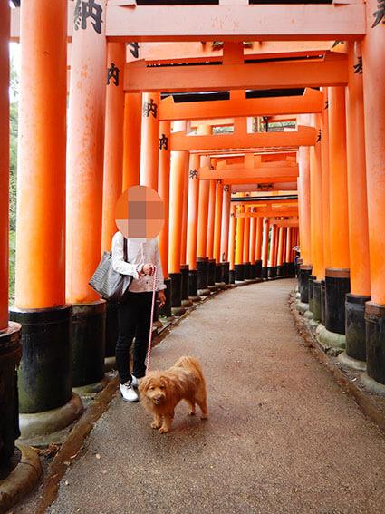 千本鳥居と犬の写真