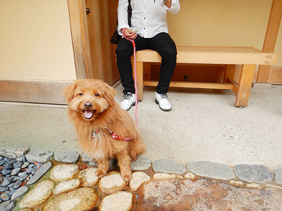 ベンチで待機する犬の写真