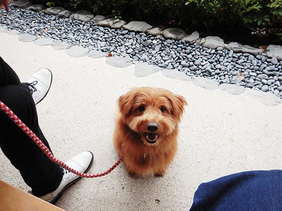 おねだりする犬の写真