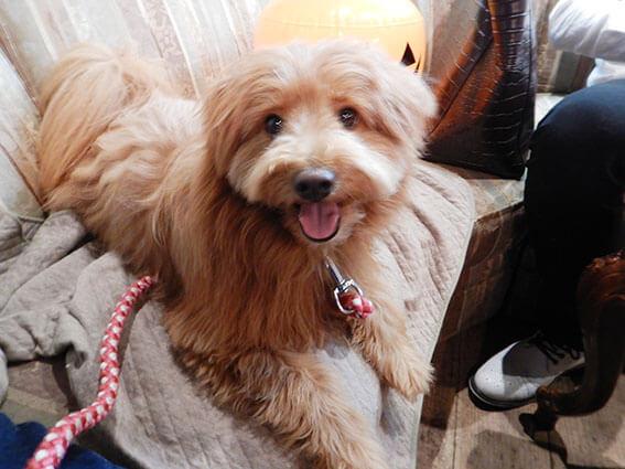 ソファに座る犬の写真