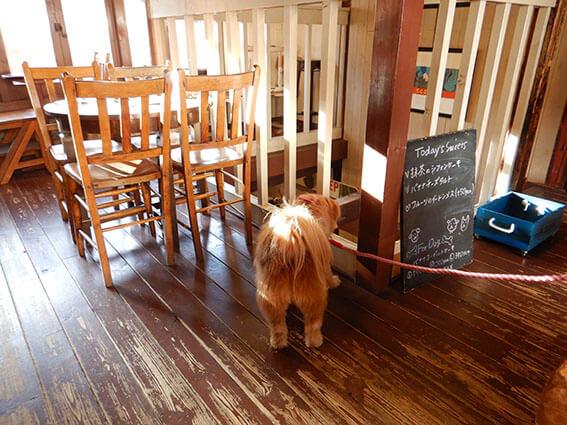 カフェでウロウロする犬の写真