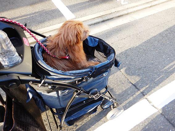 カートに乗る犬の写真