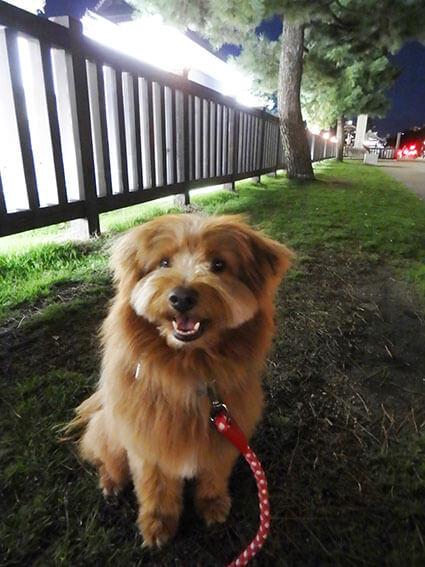 二条城前に座る犬