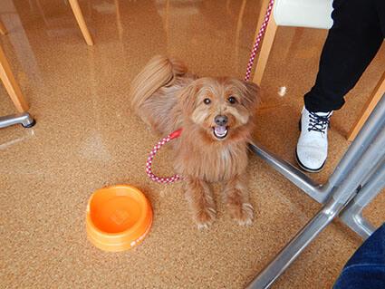 カフェで見上げる犬の写真