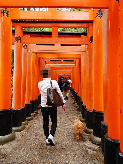 伏見稲荷と犬の写真