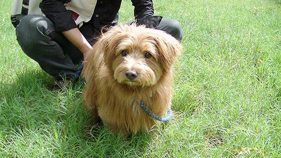 うんち中の犬の写真