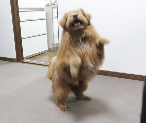 飛びつこうとしている犬