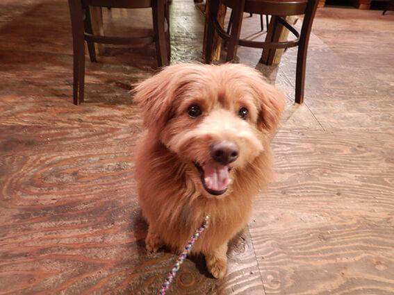 カフェの店内でくつろぐ犬