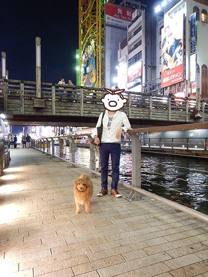 道頓堀を散歩する犬の写真