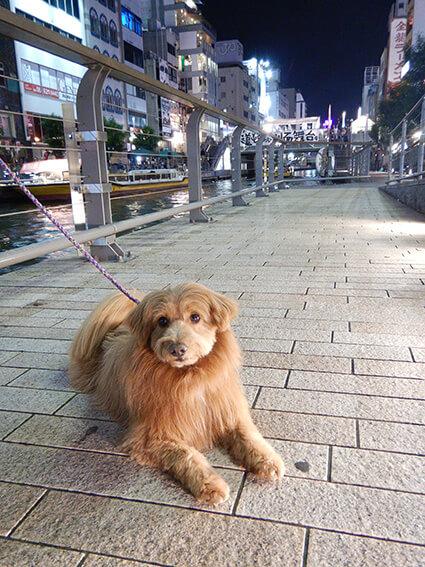 とんぼりリバーウォークと犬の写真