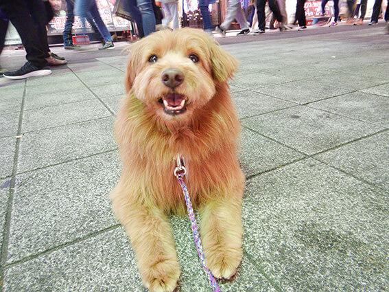 人混みを歩く犬