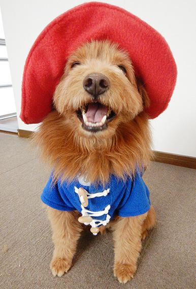パディントン犬の写真