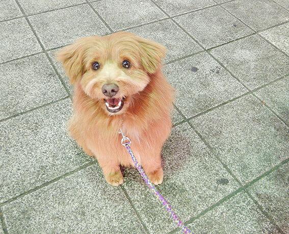 お目々キラキラの犬の写真