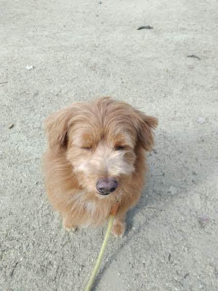目をつぶる犬の写真