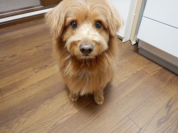 キョトンとした顔の犬