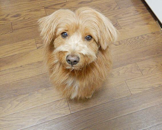 不満そうな顔の犬の写真