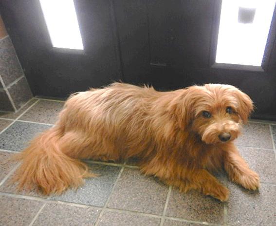 玄関で陣取る犬の写真