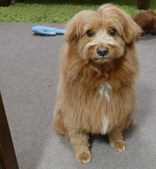 飼い主を監視する犬の写真