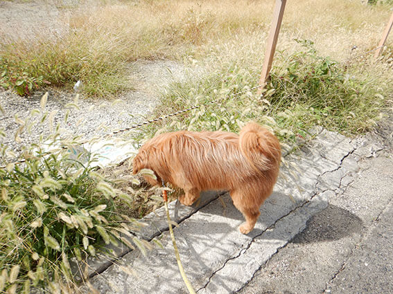匂いを嗅ぐ犬の写真