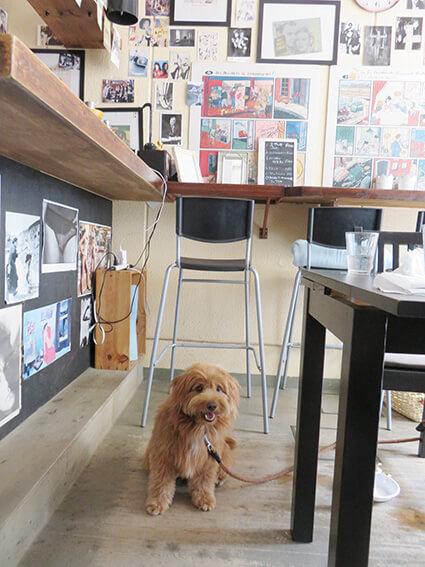 カフェに入る犬の写真