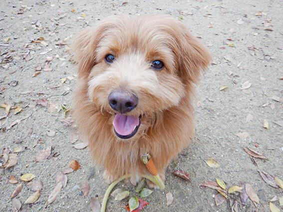 テヘヘという顔の犬