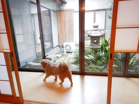 お寺ダイニング観音寺のペット用お部屋
