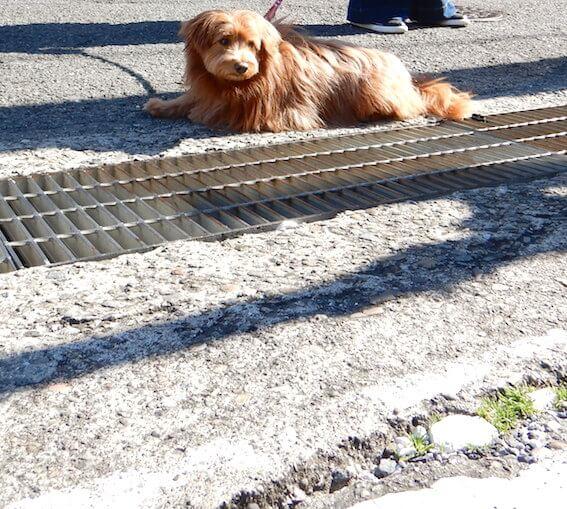 ストライキする犬の写真